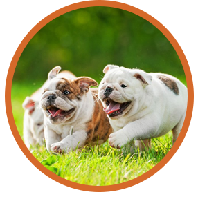 Veterinary Services in La Habra, Brea, Fullerton, La Mirada