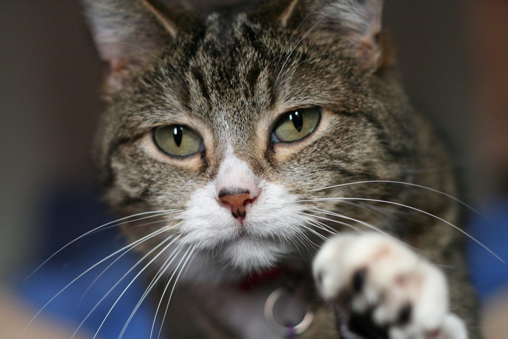 cat skin diseases and symptoms